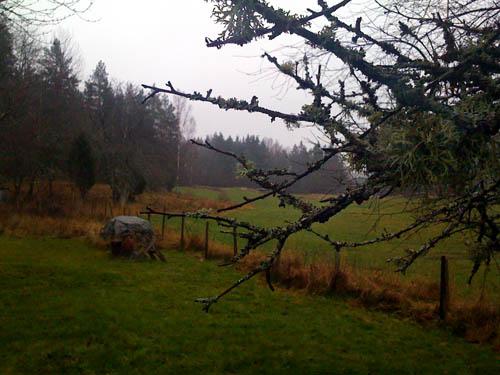 Det är gott om vitmossa på de gamla träden. Under presenningen ligger veden och väntar på att bli huggen.