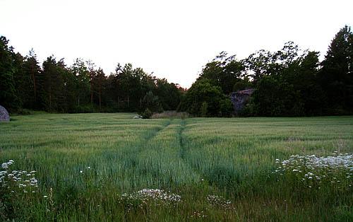 Sådana här vackra fält kan jag inte låta bli att föreviga.