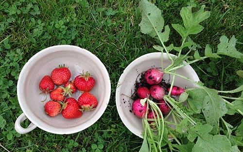 jordgubbar