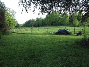 klippt gräs