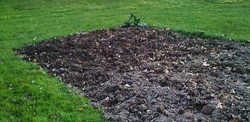 21 kvadratmeter nygrävt potatisland.