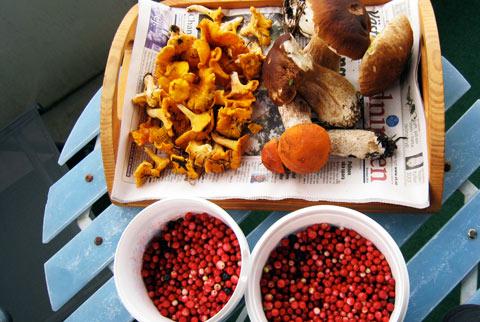 lingon och svamp