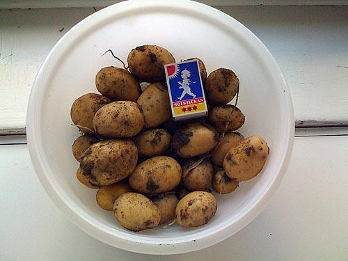 Ett potatisstånd.