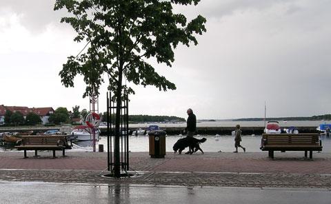 regn och hund