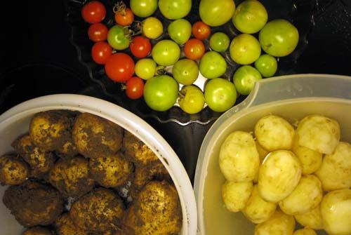 Potatis och tomater.