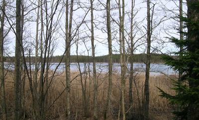 skog1