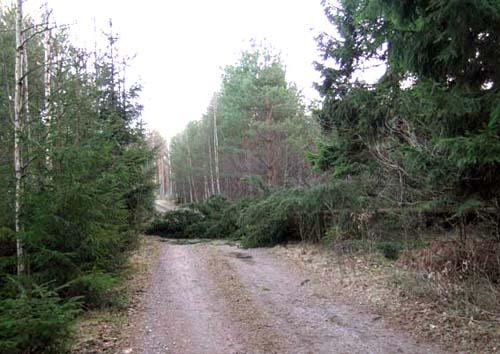 stormskog1