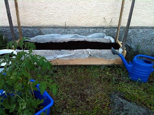 planterar tomater